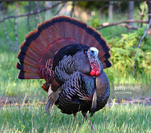Photo Credit: Jim Cummings - 560606673. getttyimages.com. INTJ Music Playlist #17 Thanksgiving Survival