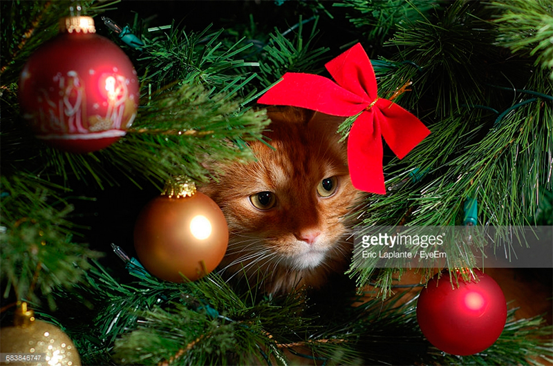 Photo Credit: Eric Laplante/eyem-683846747. gettyimages.com. Published in INTJ Principles of the Holidays. Alwaysuttori.com