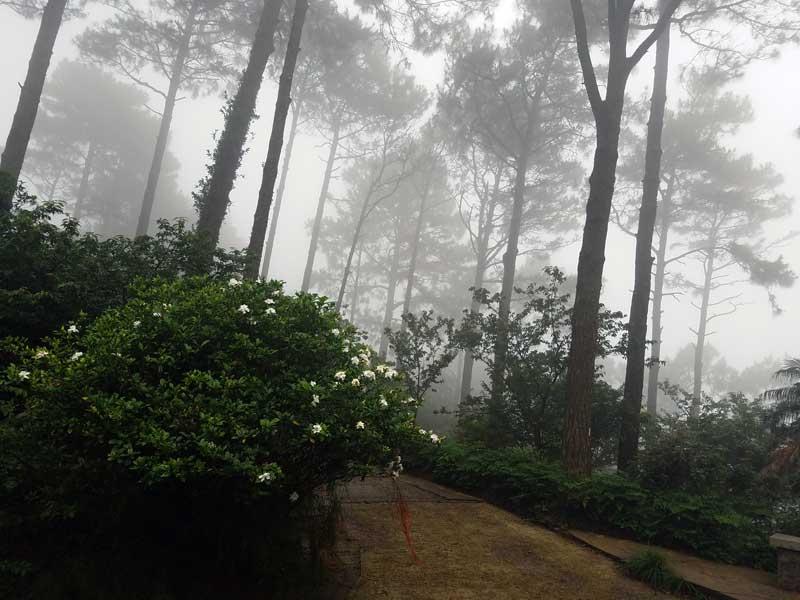 Kadoorie Mountain Mist. Photo Credit: I'mari Avey. Always Uttori INTJ June Challenge. Alwaysuttori.com