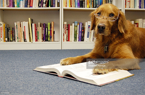 Dog Reading. Photo Credit: Elizabeth Aldridge - 107056592. gettyimages.com. Dog Days of Summer Reading List. Alwaysuttori.com